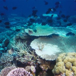 How is Climate Change Affecting Our Oceans?